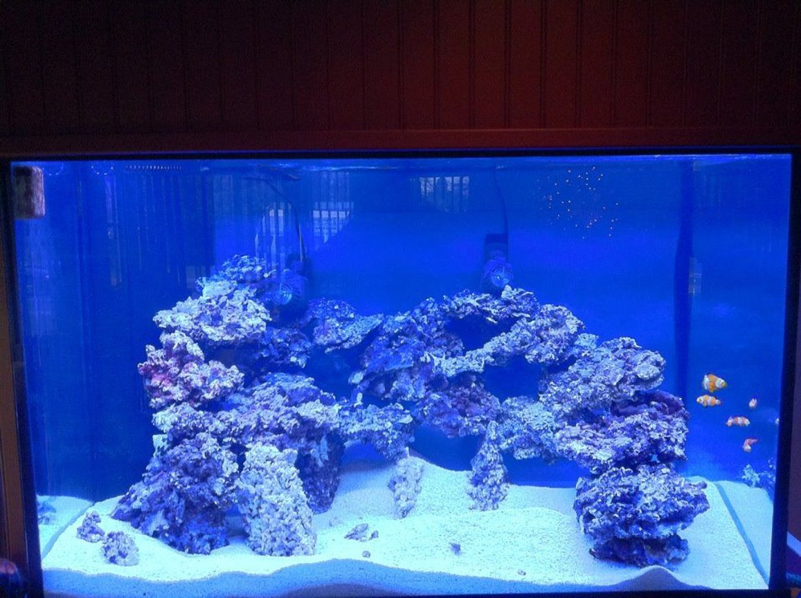 10000 gallons reef tank (mostly live coral and fish) - tank