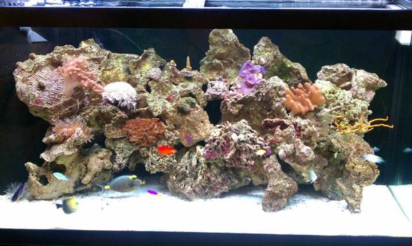 90 gallons reef tank (mostly live coral and fish) - 90g reef