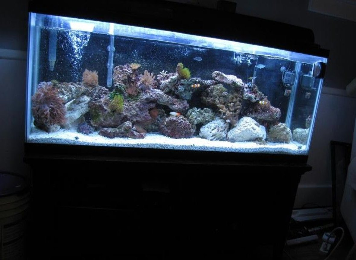 55 gallons reef tank (mostly live coral and fish) - 55 gallon t5 lighting powerhead filter protein skimmer heater 2 clownfish tomato clownfish scribbled rabbitfish 3 green chromis 3-stripe damsel coral banded shrimp hemit crew flat anemone assorted corals