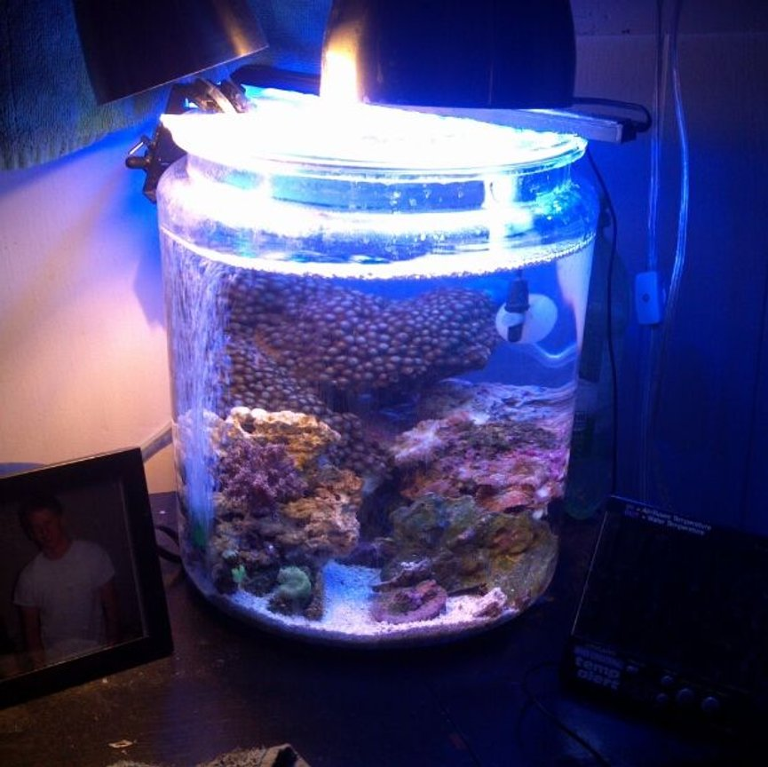 2 gallons reef tank (mostly live coral and fish) - my 2 gallon cookie jar reef!