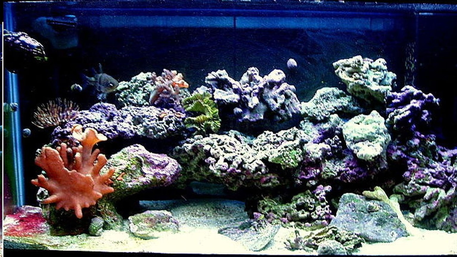 30 gallons reef tank (mostly live coral and fish) - My first tank ever, fallowed everything I've read, build my own sump, and so far everything is healthy as can be!