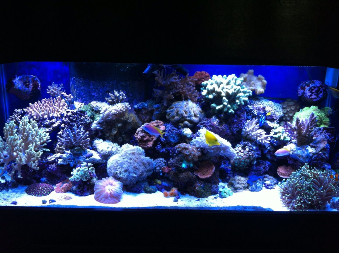 75 gallons reef tank (mostly live coral and fish) - 75 gallon mixed reef tank
