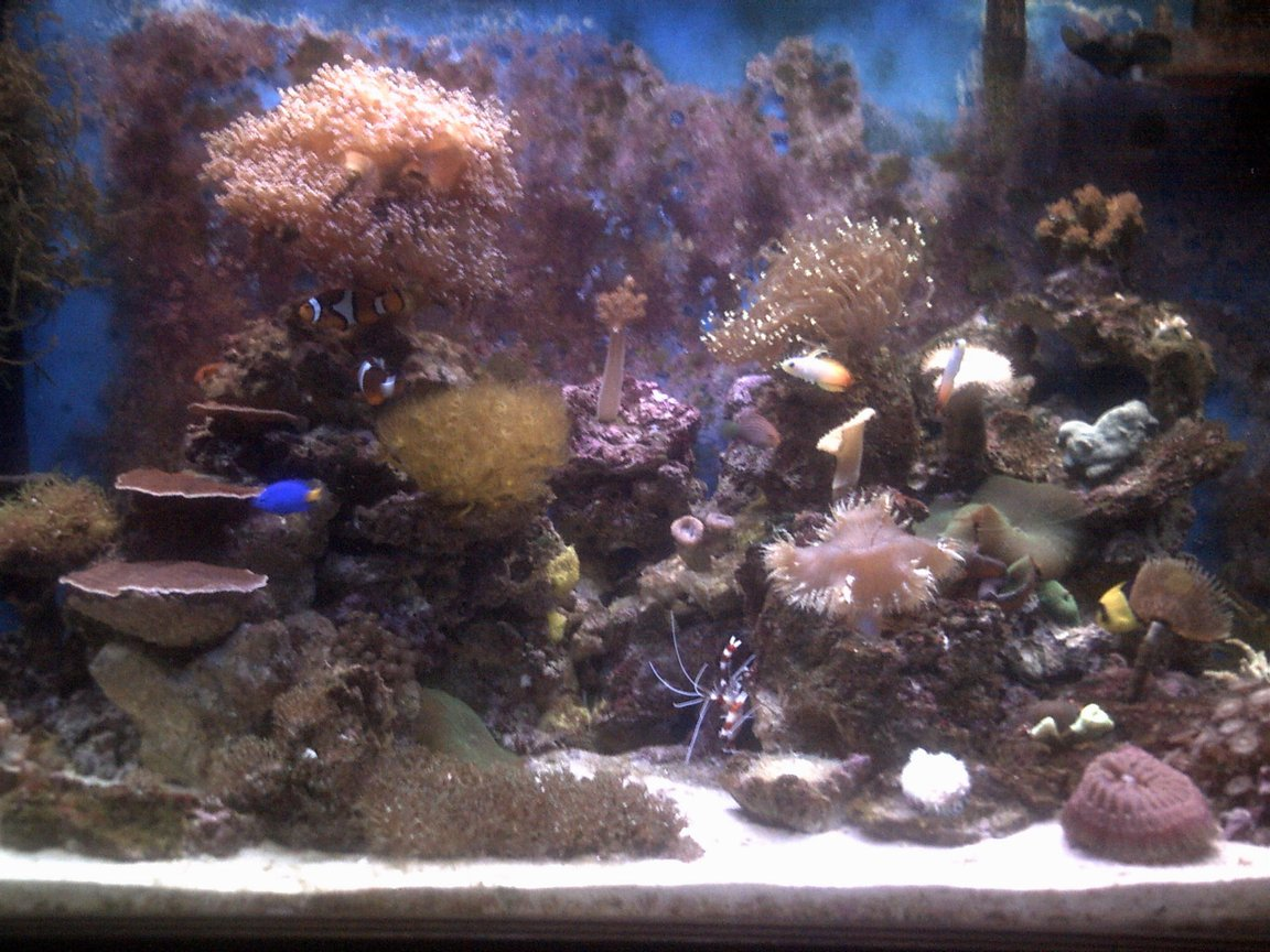 70 gallons reef tank (mostly live coral and fish) - 70 gallon mixed reef tank