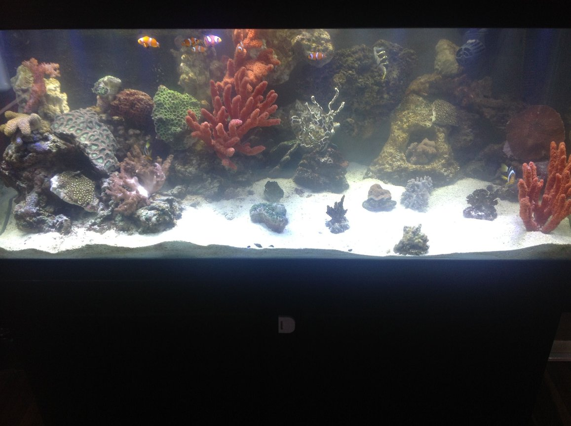 75 gallons reef tank (mostly live coral and fish) - Pic