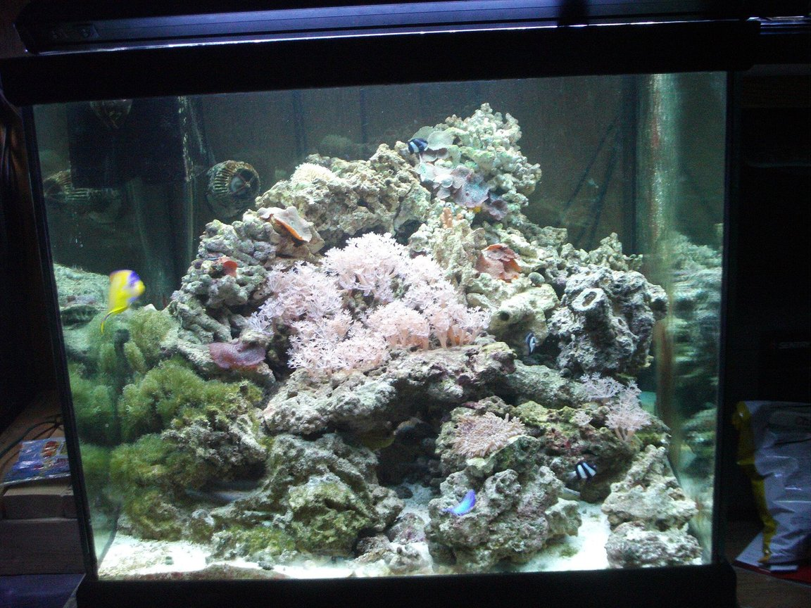 277 gallons reef tank (mostly live coral and fish) - My 93 cube after tar down and rebuild as part of my system