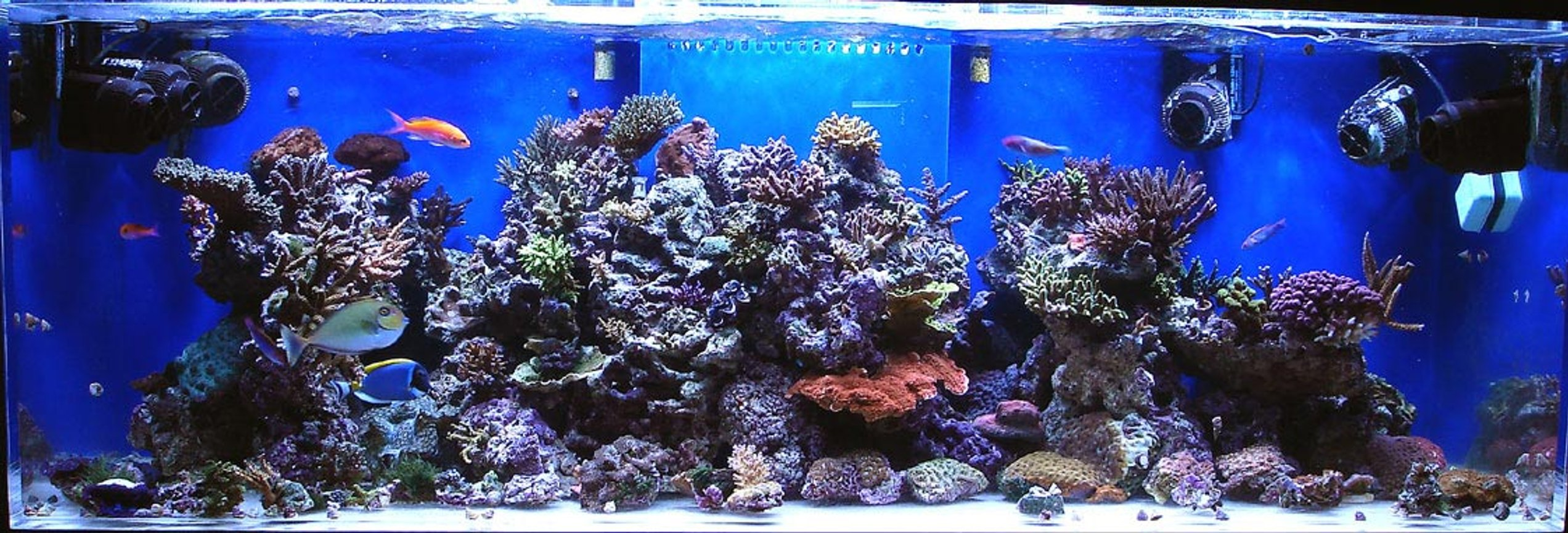 180 gallons reef tank (mostly live coral and fish) - 180g BB SPS/lps tank