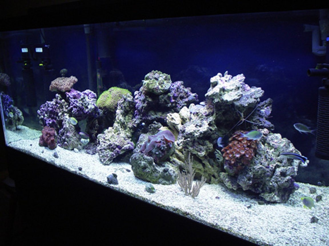 75 gallons reef tank (mostly live coral and fish) - 1/12/06