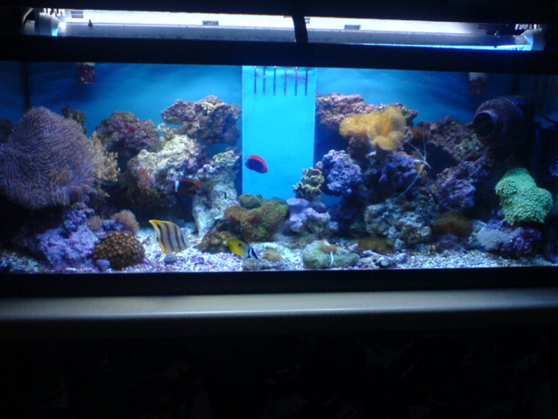70 gallons reef tank (mostly live coral and fish) - My 4ft Reef Tank