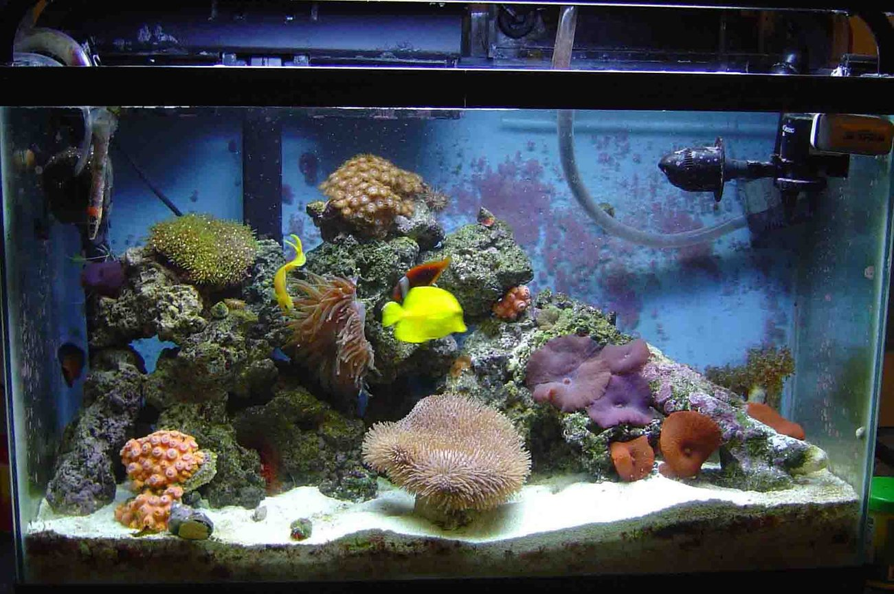 30 gallons reef tank (mostly live coral and fish) - 30 gal reef