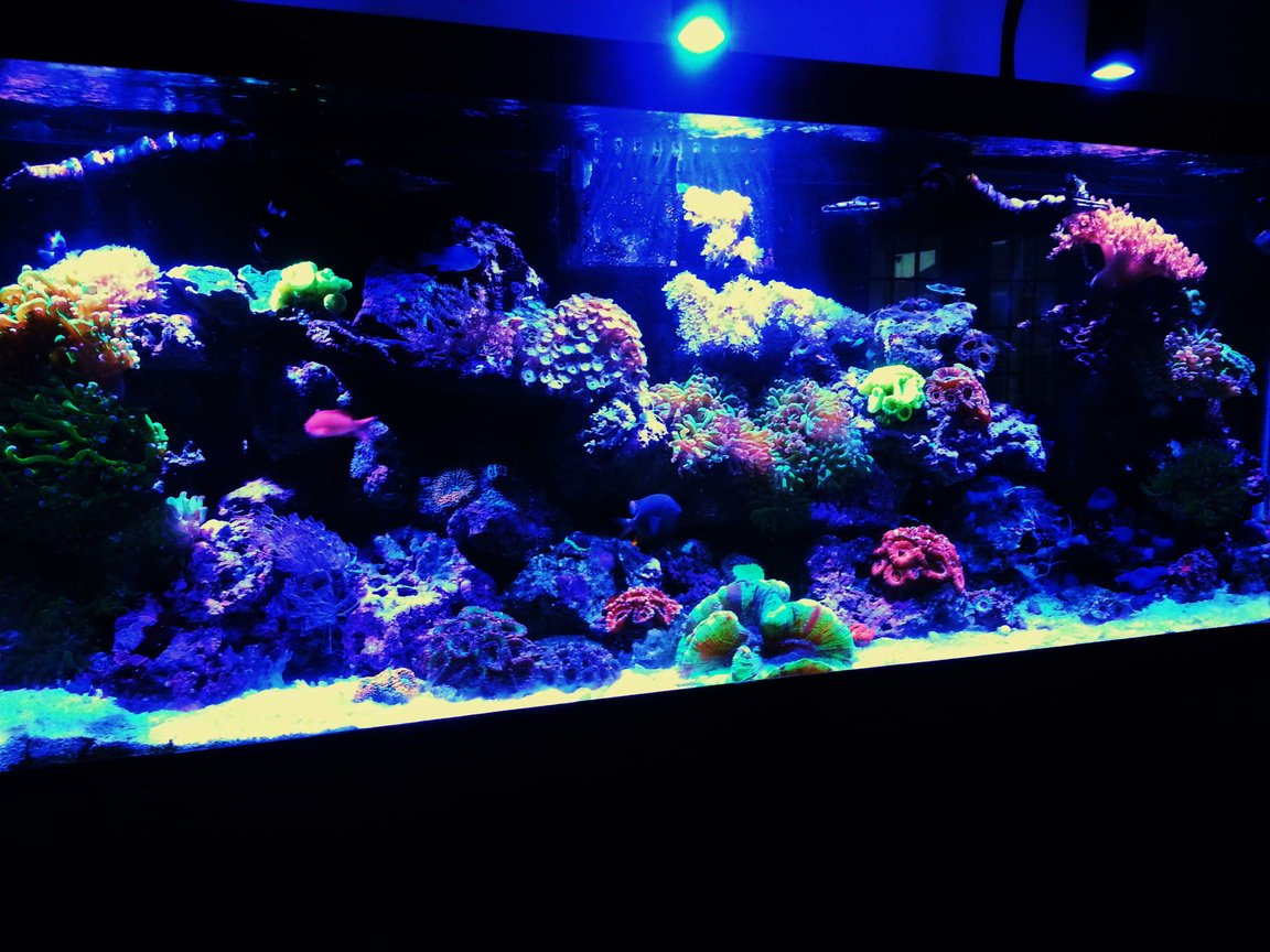 125 gallons reef tank (mostly live coral and fish) - Reef tank