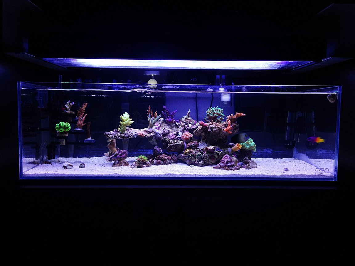 9 gallons reef tank (mostly live coral and fish) - My current ADA 60f reef The clarity and quality of these tanks are amazing!!
