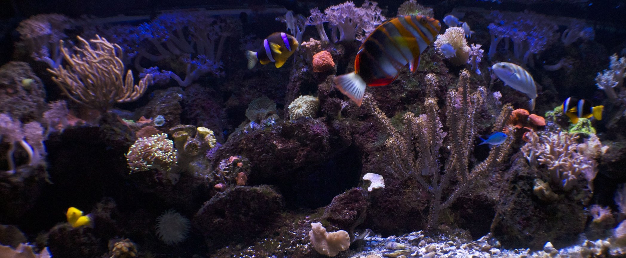 180 gallons reef tank (mostly live coral and fish) - 180 reef