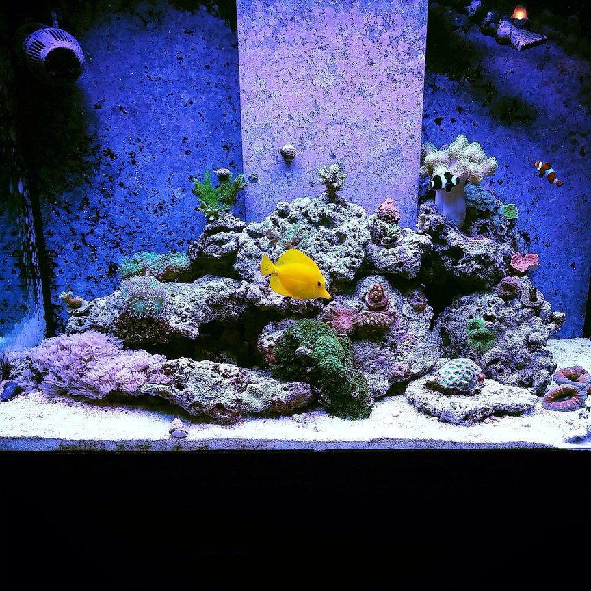 70 gallons reef tank (mostly live coral and fish) - My reef