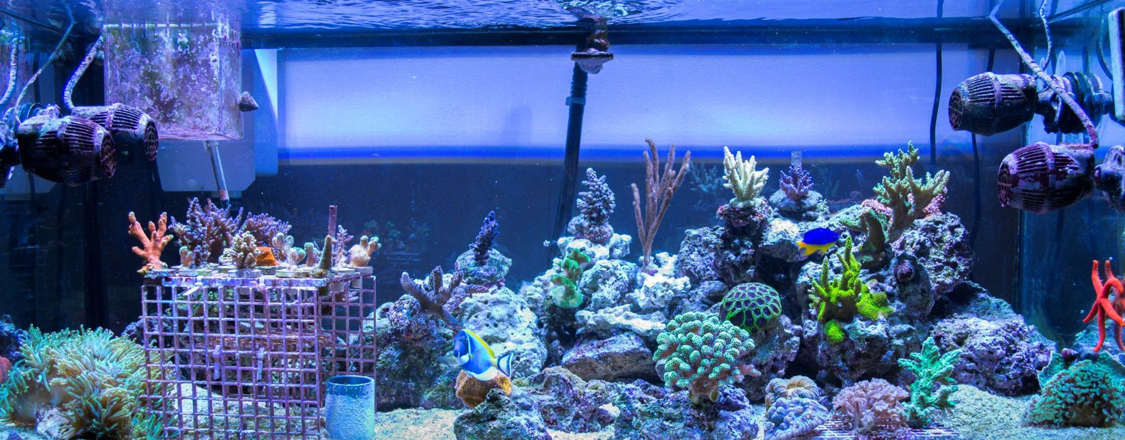 75 gallons reef tank (mostly live coral and fish) - 75 gallon SPS Dominated Mixed Reef Tank