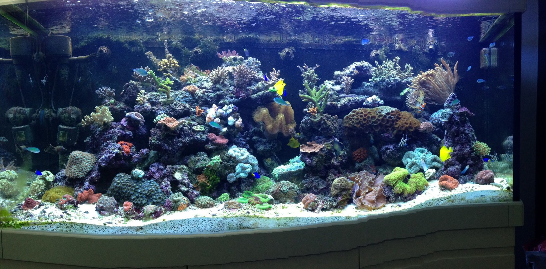 65 gallons reef tank (mostly live coral and fish) - My tank