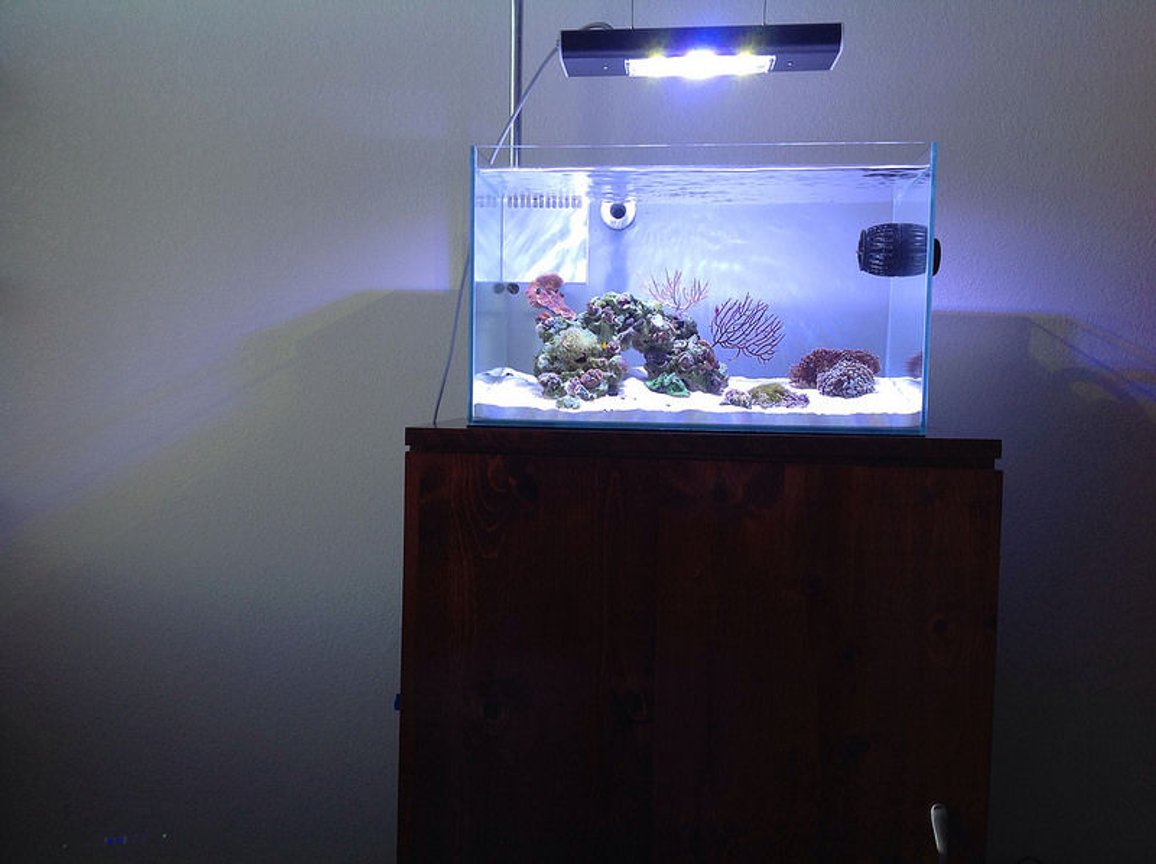 12 gallons reef tank (mostly live coral and fish) - Mr Aqua 11.8