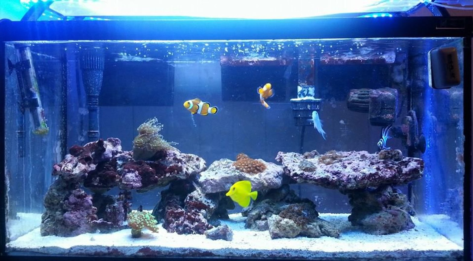 30 gallons reef tank (mostly live coral and fish) - 30g start up tank..running about 10 months now