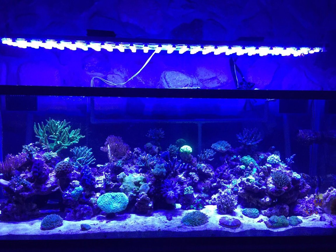 400 gallons reef tank (mostly live coral and fish) - my reef tank