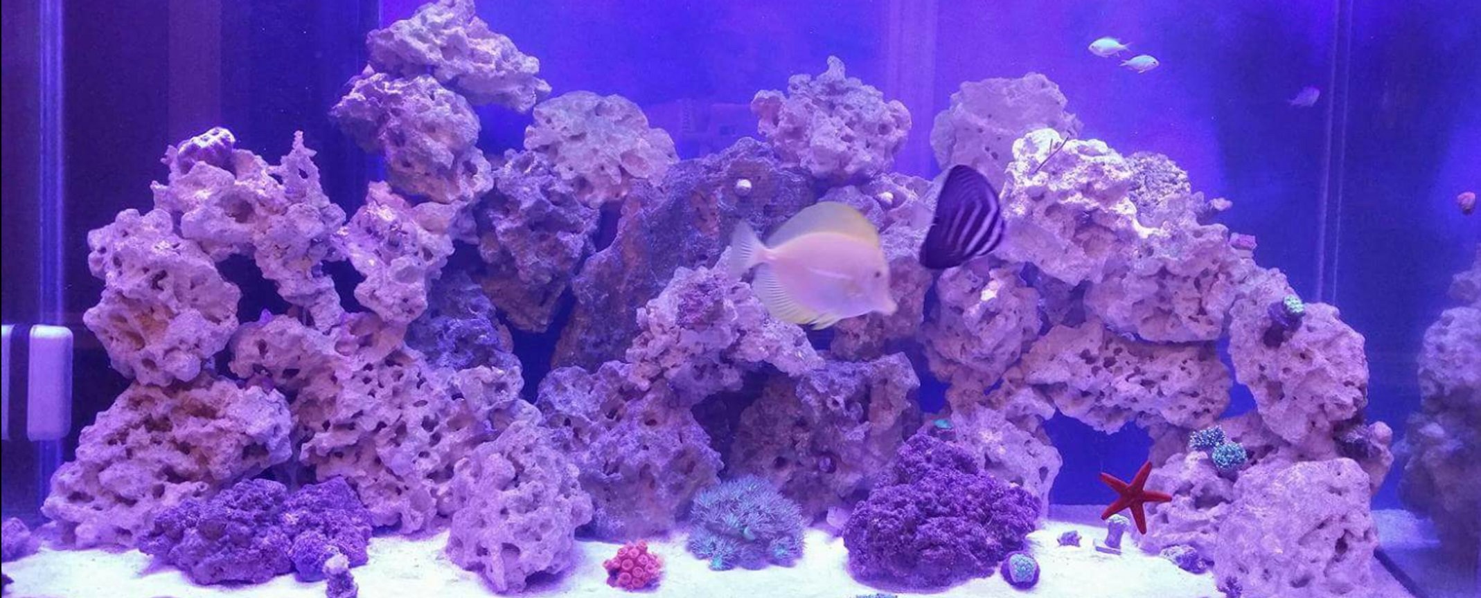 110 gallons reef tank (mostly live coral and fish) - Mixed 110g reef