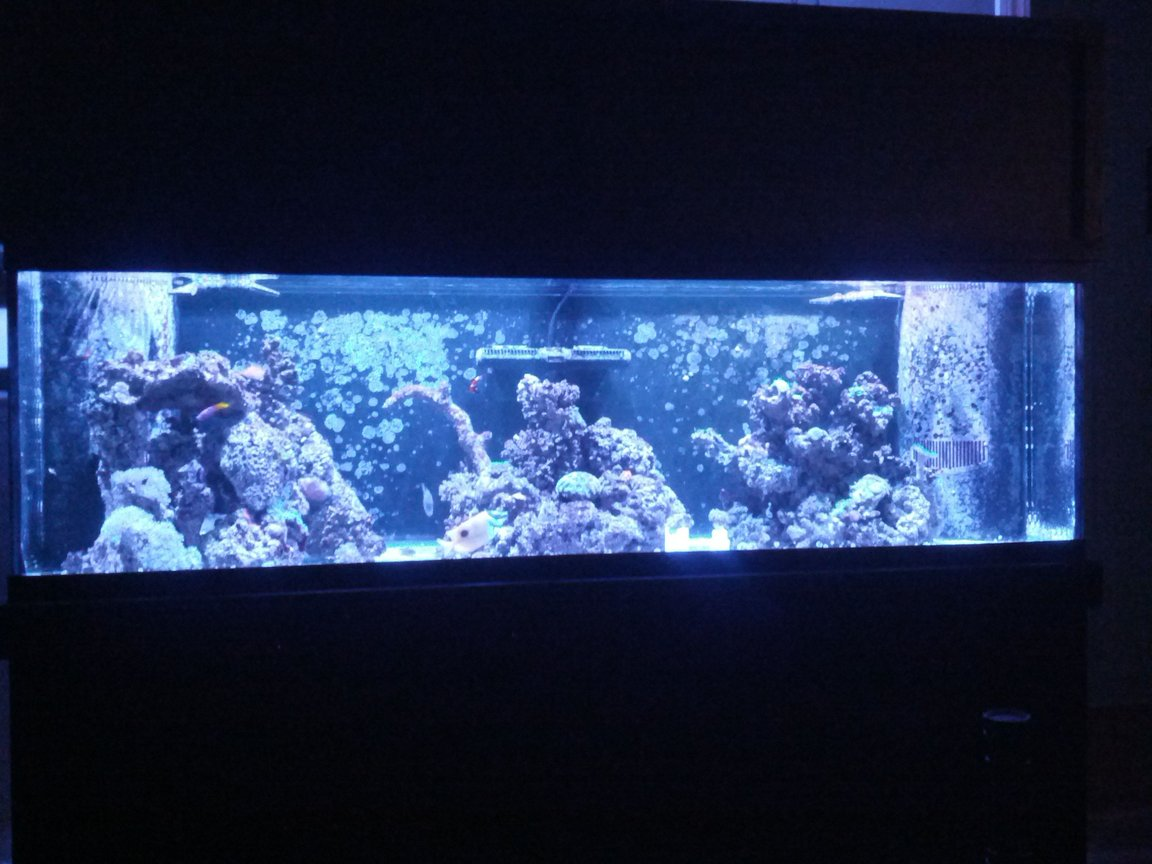 125 gallons reef tank (mostly live coral and fish) - 125 gal