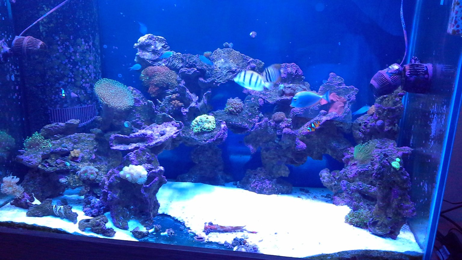 150 gallons reef tank (mostly live coral and fish) - Reef tank