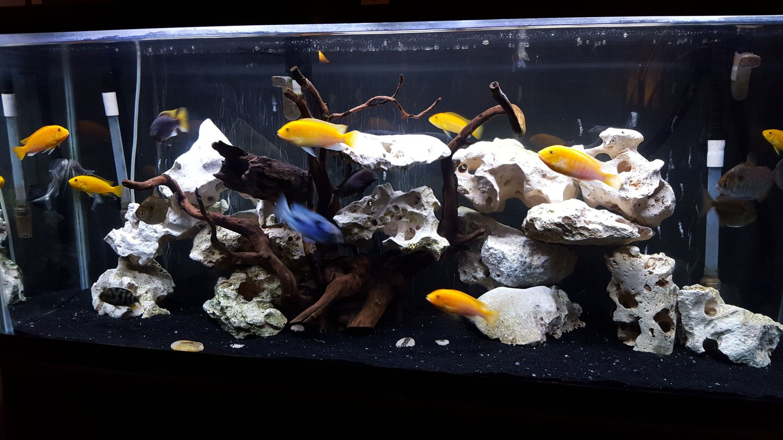 30 gallons reef tank (mostly live coral and fish) - Reef tank Softies