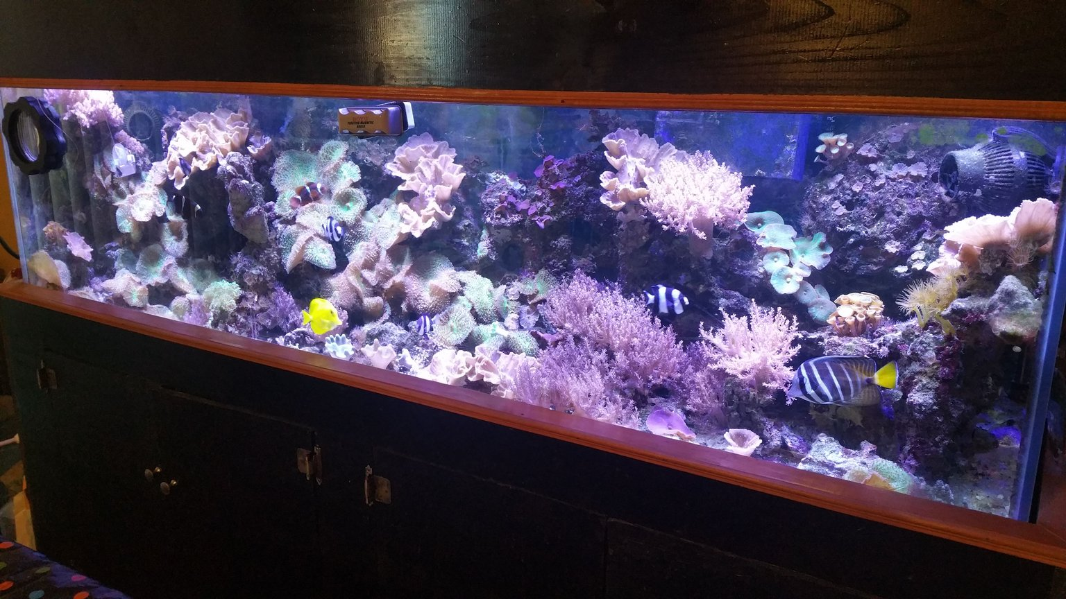 125 gallons reef tank (mostly live coral and fish) - 125 gallon reef - The Brooklyn Hoodlum Fish 30 gallon Sump 2 WP40 Wave Makers 3 DSuny LED Fixtures