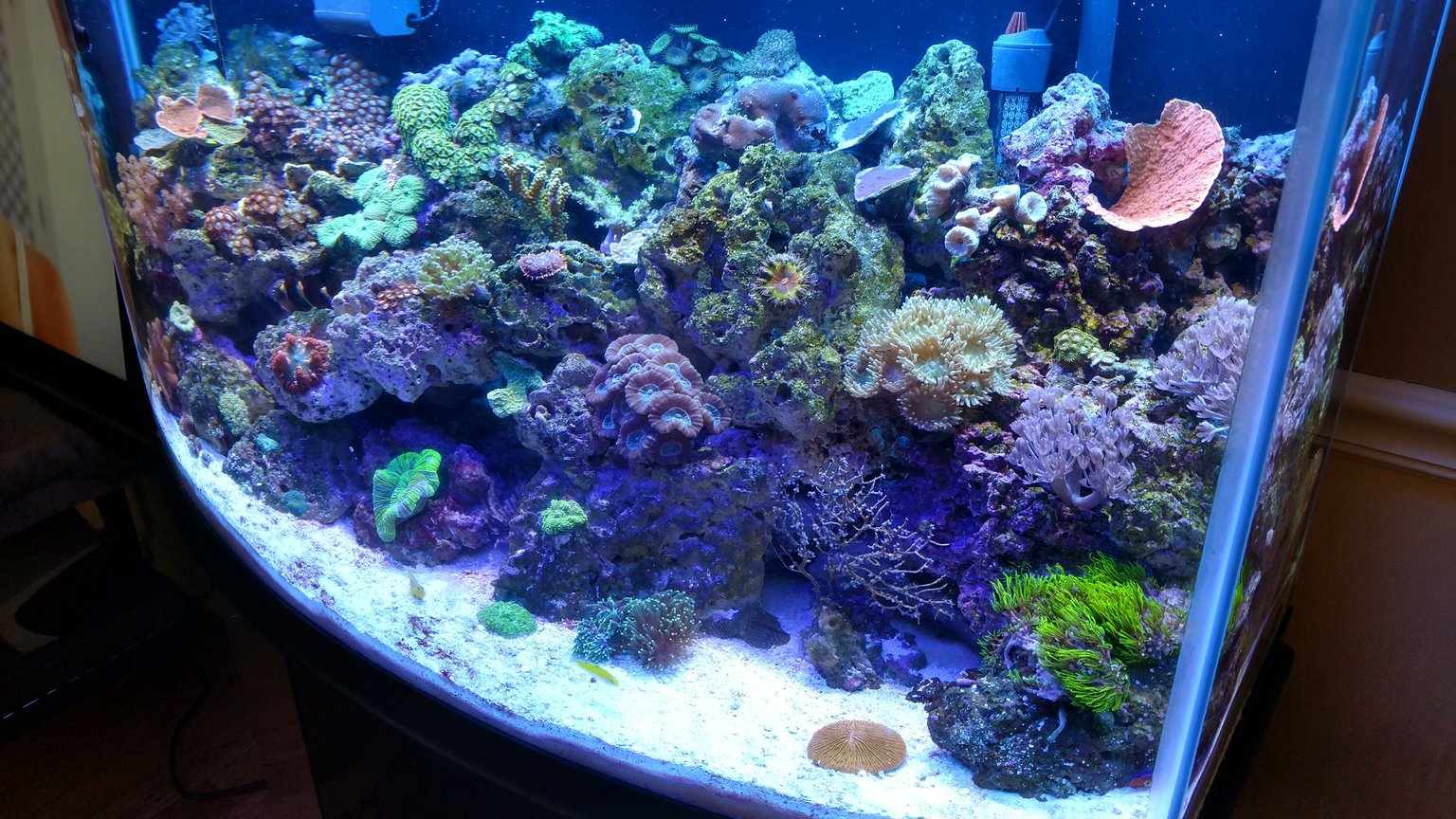 46 gallons reef tank (mostly live coral and fish) - 46gal reef tank This tank is only been going 4 months, going well so far! So glad I got back into this hobbie after a 7 year hiatus! Still battling the new tank alge and cynical but I'm fighting it.