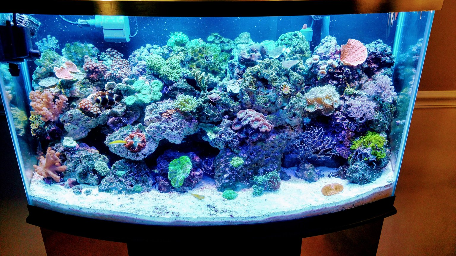 46 gallons reef tank (mostly live coral and fish) - 46 bowfront reef Inverts, softies,LPs, and limited sps