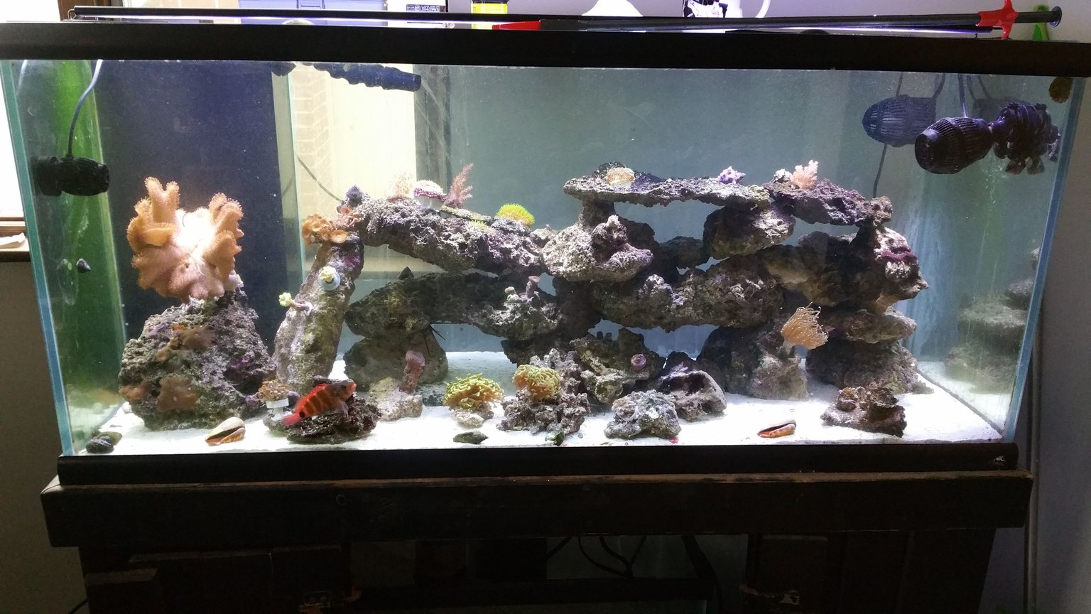 75 gallons reef tank (mostly live coral and fish) - 75 with one hawk