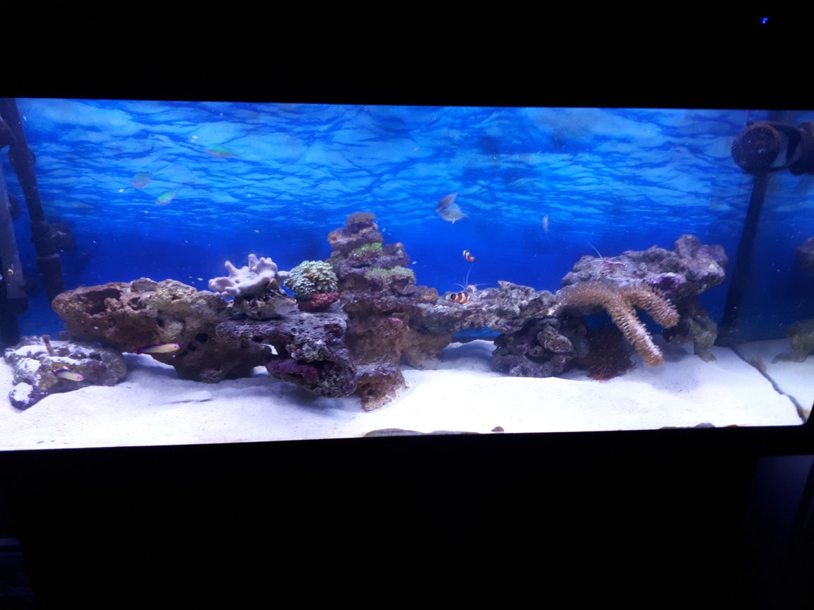 64 gallons reef tank (mostly live coral and fish) - Newly established about 4 months old, only introduced a few soft corals and fish into it this month once tank was fully cycled and clean up crew got to work