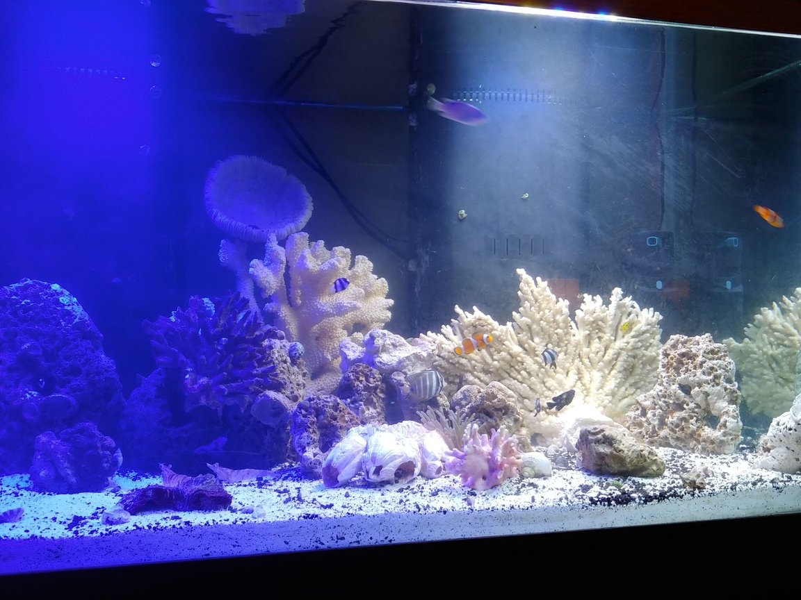 125 gallons reef tank (mostly live coral and fish) - Relaxation at its finest