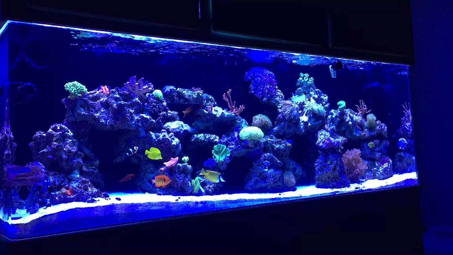 139 gallons reef tank (mostly live coral and fish) - MY 140 GALLON REEF TANK