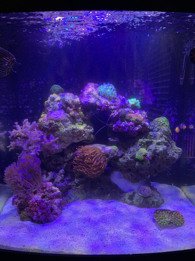 32 gallons reef tank (mostly live coral and fish) - 6 months in