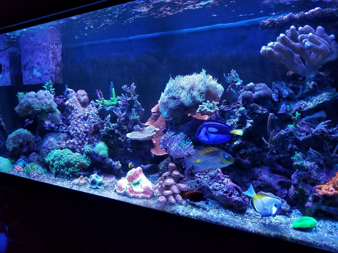 75 gallons reef tank (mostly live coral and fish) - My 75g before I lost it due to the hurricanes
