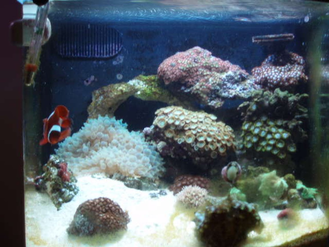 reef tank (mostly live coral and fish) - 12 gallon nano cube