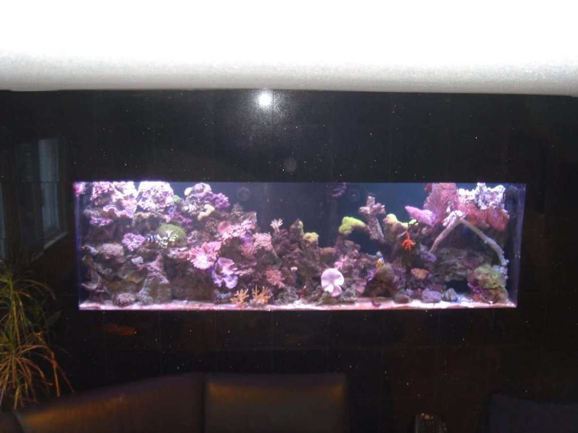 300 gallons reef tank (mostly live coral and fish) - My 300 gallon in-wall salt water reef tank. Wall is black granite - which makes taking pics a bit hard. Enjoy.