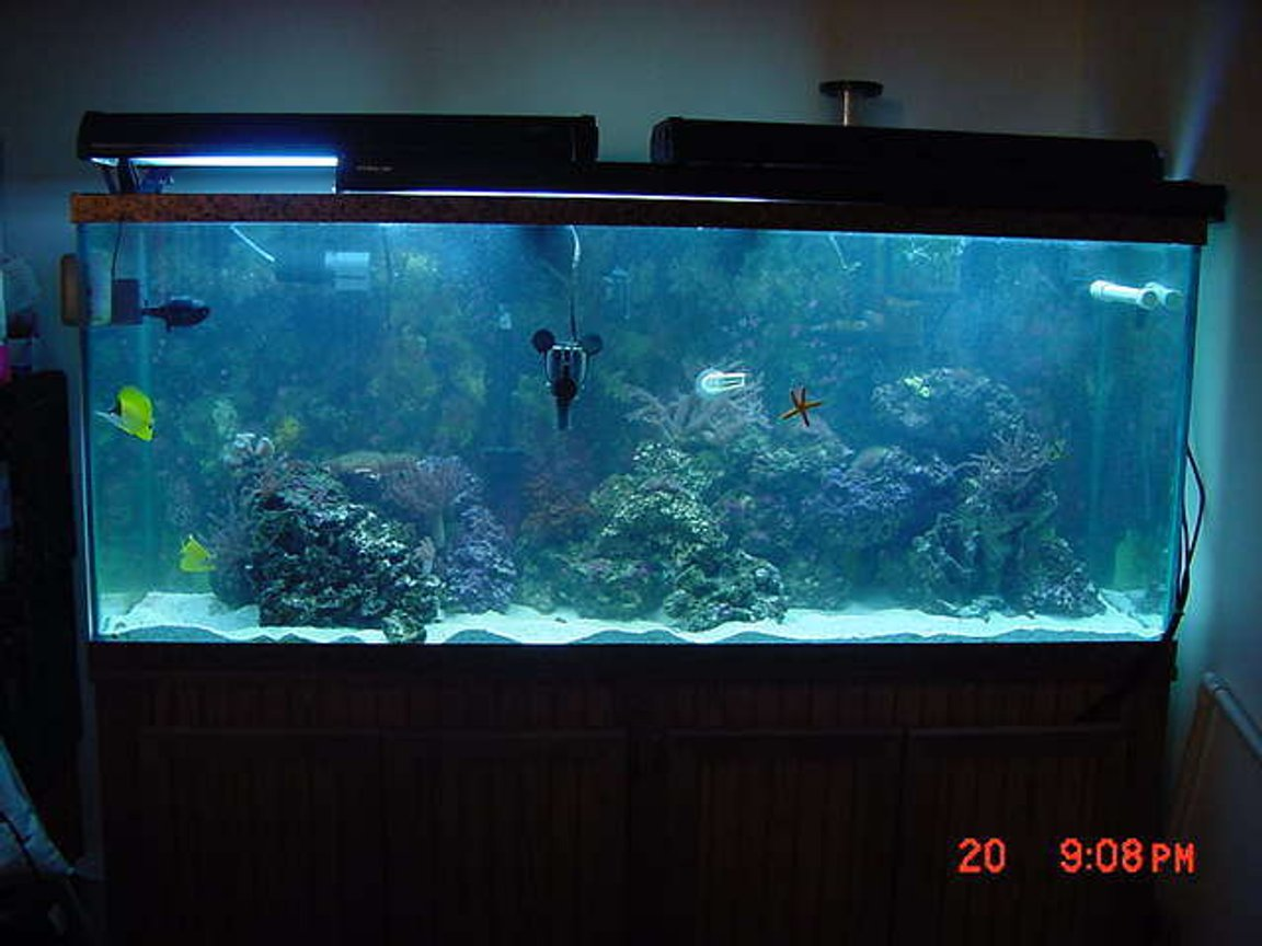 125 gallons reef tank (mostly live coral and fish) - MY NEW TANK 4/07/06