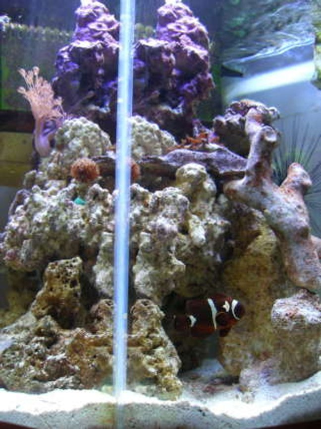 90 gallons reef tank (mostly live coral and fish) - 35 gal tank