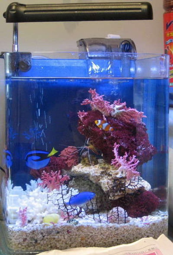 2 gallons reef tank (mostly live coral and fish) - Dori & nemo!!