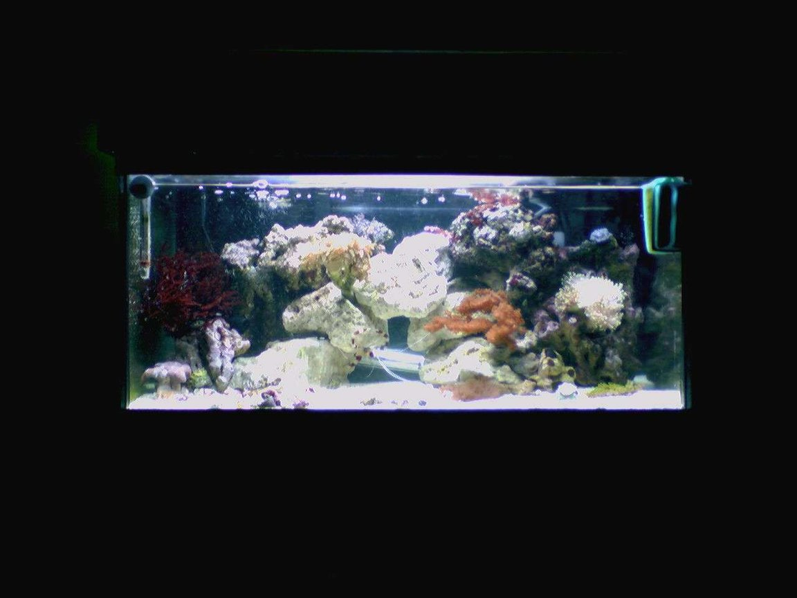 15 gallons reef tank (mostly live coral and fish) - 15 gallon reef tank