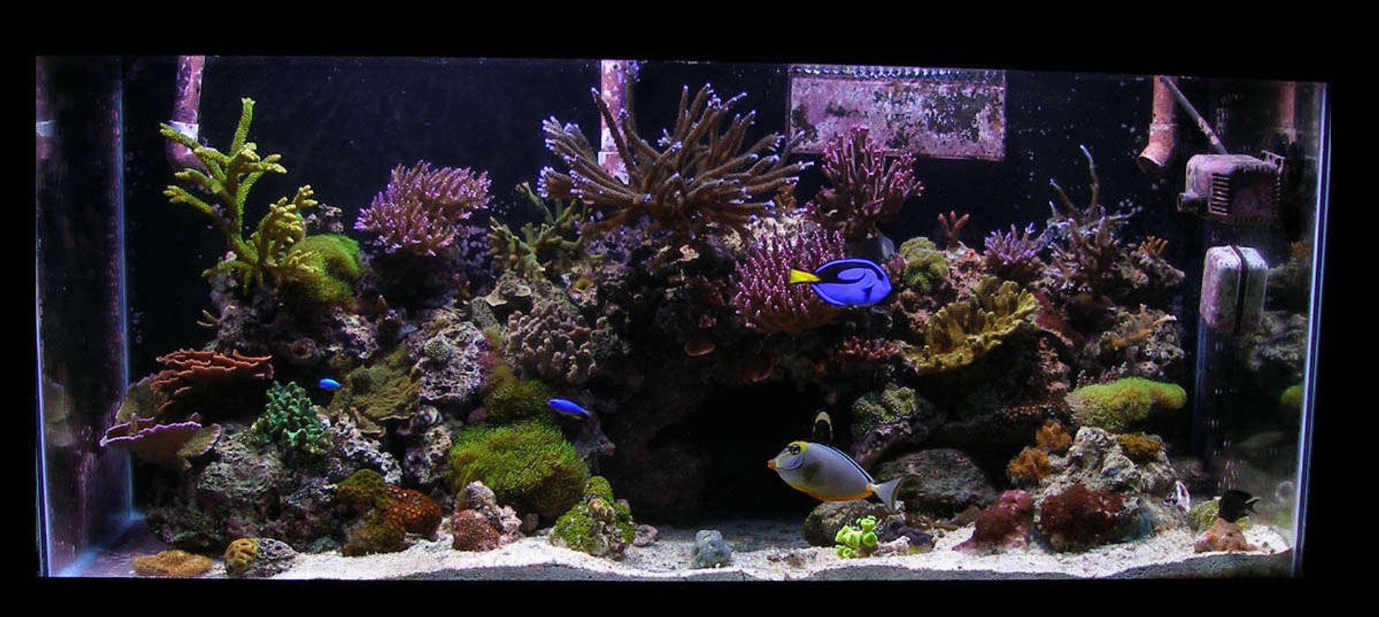 85 gallons reef tank (mostly live coral and fish) - 85 gallon reef