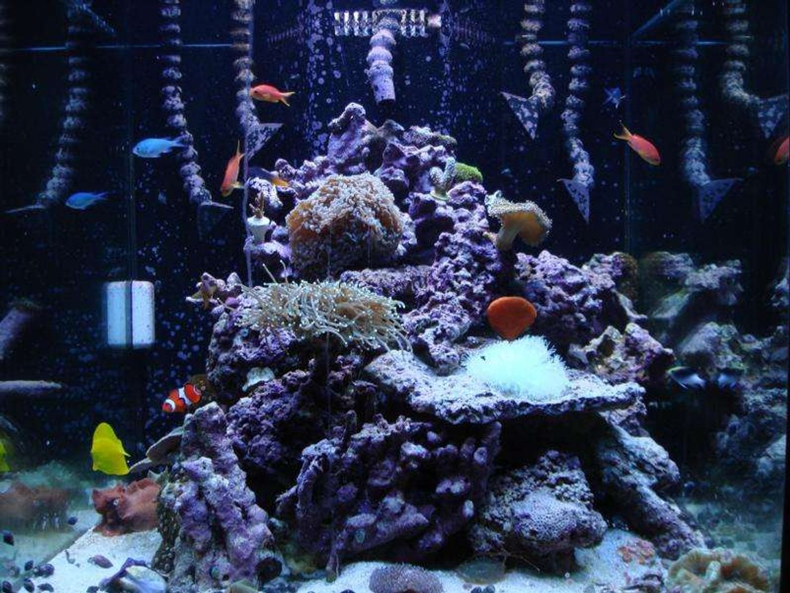 120 gallons reef tank (mostly live coral and fish) - front
