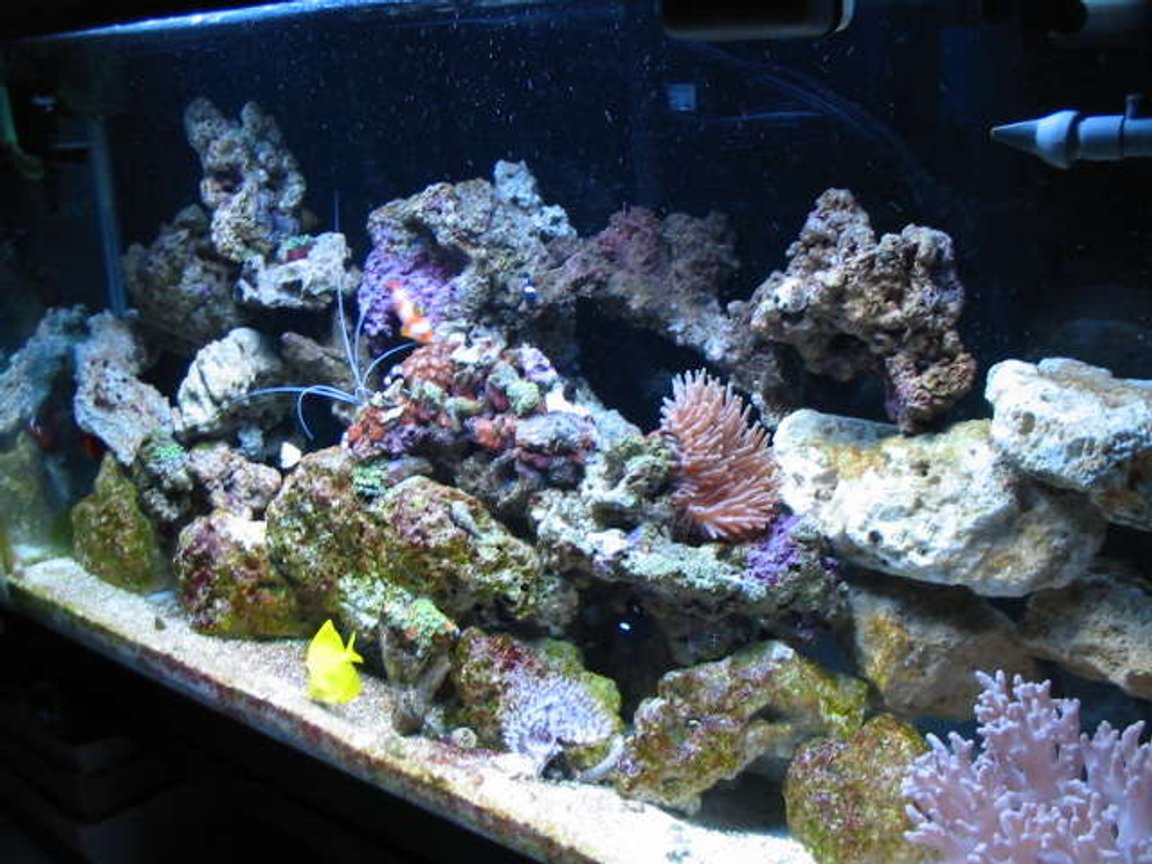 38 gallons reef tank (mostly live coral and fish) - Full tank veiw