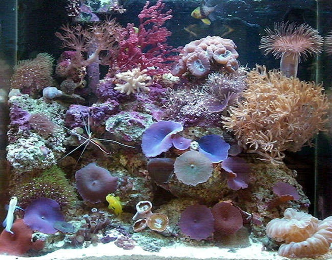 15 gallons reef tank (mostly live coral and fish) - 15 Gal Nano Reef