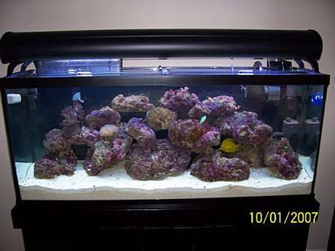 55 gallons reef tank (mostly live coral and fish) - My 55 gallon salt tank