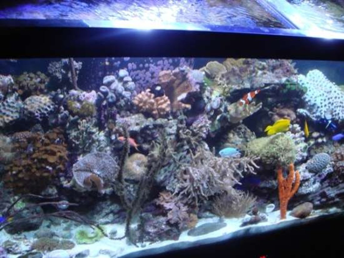 90 gallons reef tank (mostly live coral and fish) - Pic of my 90 gallon reef.
