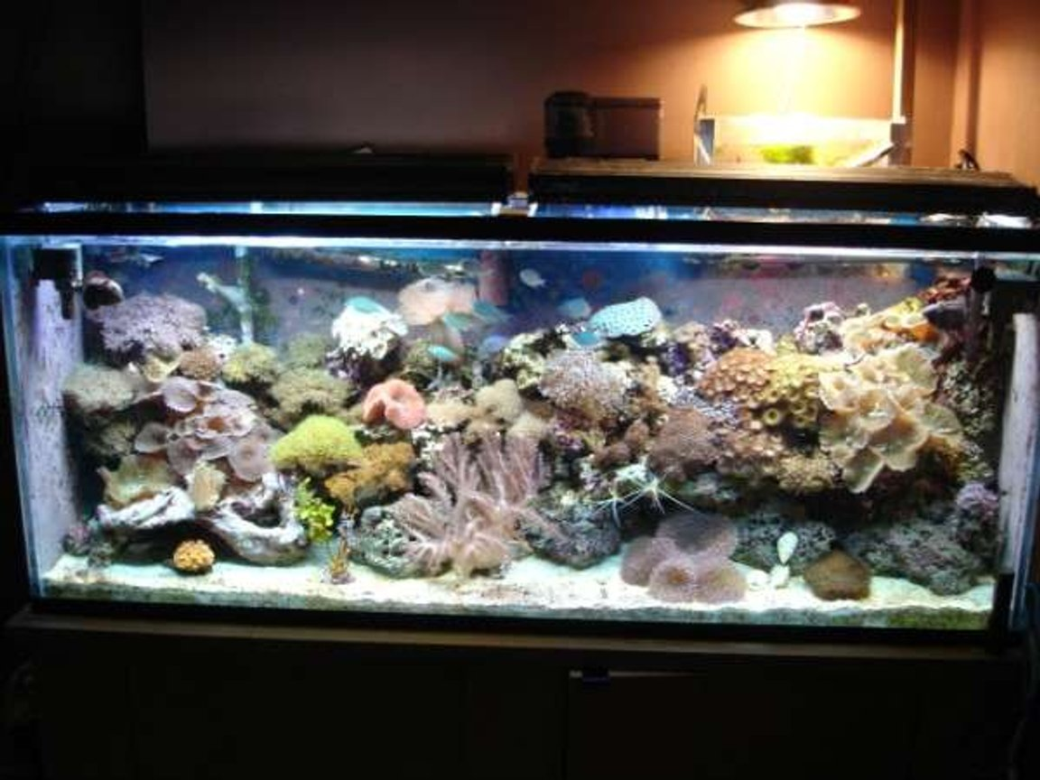 112 gallons reef tank (mostly live coral and fish) - 100 gal reef