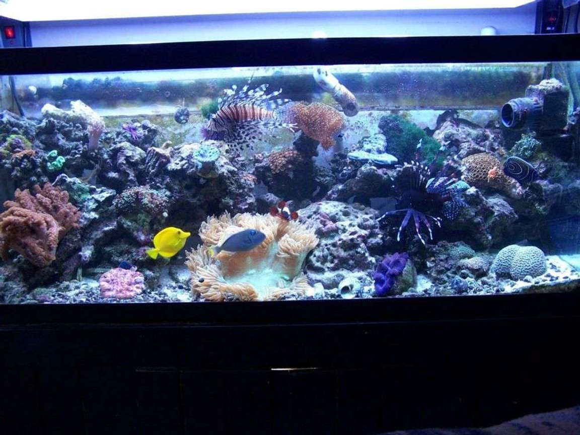 75 gallons reef tank (mostly live coral and fish) - predatory reef