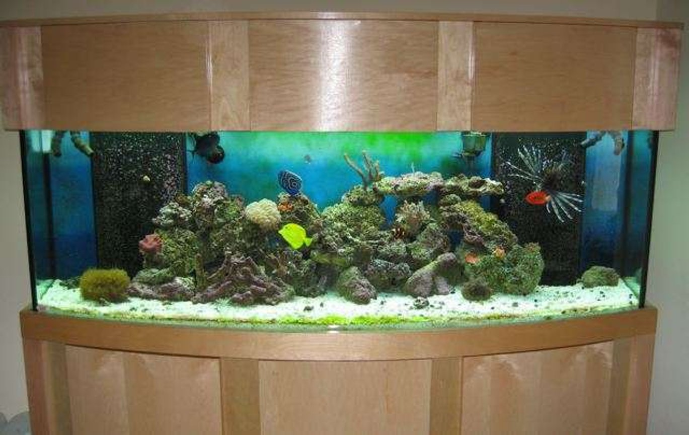 155 gallons reef tank (mostly live coral and fish) - 155 bow 6 Months